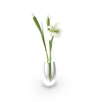 Lilly Flowers in Vase PNG & PSD Images