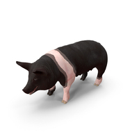 Hampshire Pig Sow PNG & PSD Images