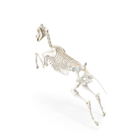 Jumping Horse Skeleton PNG & PSD Images