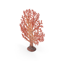 Fan Coral PNG & PSD Images
