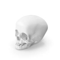 Child Skull PNG & PSD Images