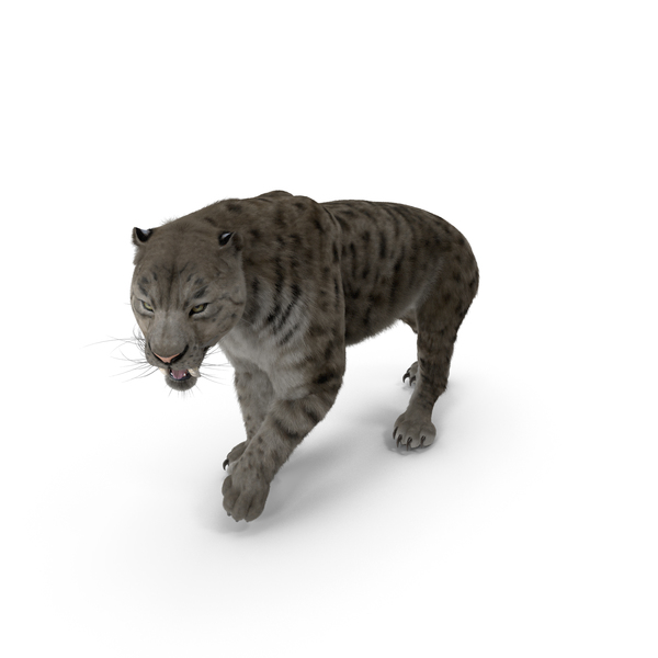 Arctic Saber Tooth Cat Walking Pose with Fur PNG & PSD Images