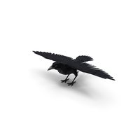 Black Crow PNG & PSD Images