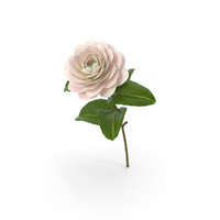 Blooming Flower Camelia PNG & PSD Images
