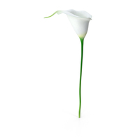 Calla Flower PNG & PSD Images