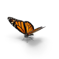 Danaus Plexippus Butterfly PNG & PSD Images