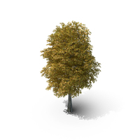 10 Meter Autumn Rock Elm Tree PNG & PSD Images