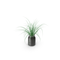 Chives PNG & PSD Images