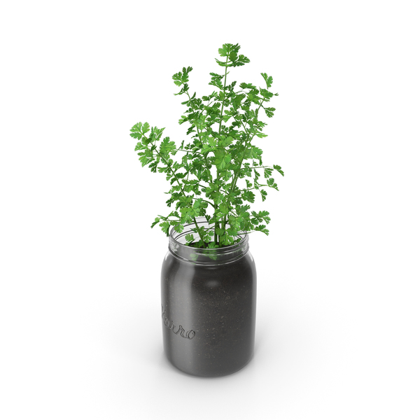 Parsley PNG & PSD Images