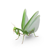 European Mantis Wings Open PNG & PSD Images