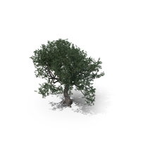 Olive Tree Type PNG & PSD Images