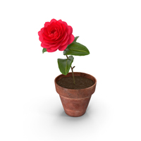 Flower Camelia in Pot PNG & PSD Images