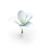 Freesia Flower PNG & PSD Images