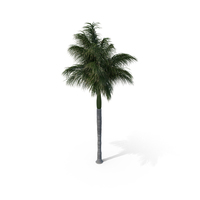 Palm Royal PNG & PSD Images