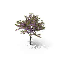 Cherry Tree PNG & PSD Images