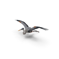 Great Blue Heron in Flight PNG & PSD Images