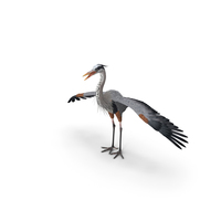 Great Blue Heron PNG & PSD Images