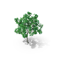 Lilac Tree PNG & PSD Images