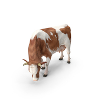 Holstein Cow Eating Pose PNG & PSD Images