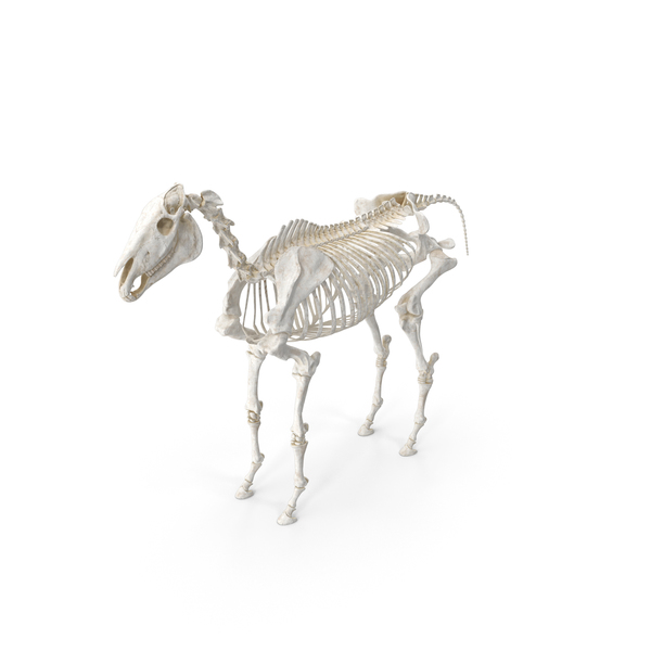 Horse Skeleton pc PNG & PSD Images
