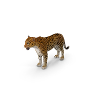 Leopard with Fur PNG & PSD Images
