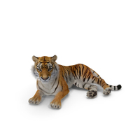Lying Tiger with Fur PNG & PSD Images