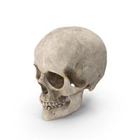 Human Skull PNG & PSD Images