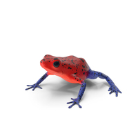Strawberry Dart Frog PNG & PSD Images