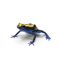 Dyeing Dart Frog PNG & PSD Images