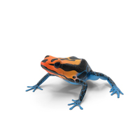 Amazonian Dart Frog PNG & PSD Images