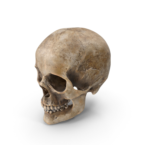 Human Skull PNG & PSD Images