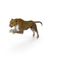 Panthera Pardus Jumping Pose PNG & PSD Images