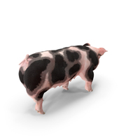 Pig Sow Peitrain Walking Pose PNG & PSD Images