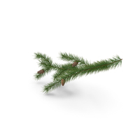 Pine Branch with Cones PNG & PSD Images