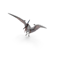 Pterosaur Pteranodon White Landing Pose with Fur PNG & PSD Images