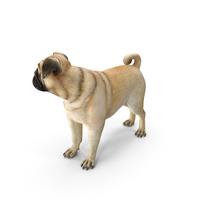 Pug Dog PNG & PSD Images
