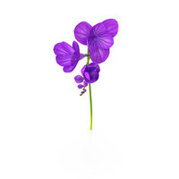Purple Freesia Flower PNG & PSD Images