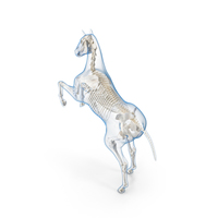 Rearing Horse Envelope with Skeleton PNG & PSD Images