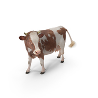 Red and White Cow with Fur PNG & PSD Images