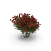 Red Crepe Myrtle Tree PNG & PSD Images
