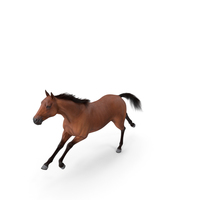 Running Bay Horse Fur PNG & PSD Images
