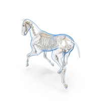 Running Horse Pose Envelope with Skeleton PNG & PSD Images