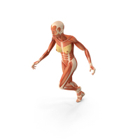 Running Woman Muscular System Anatomy PNG & PSD Images