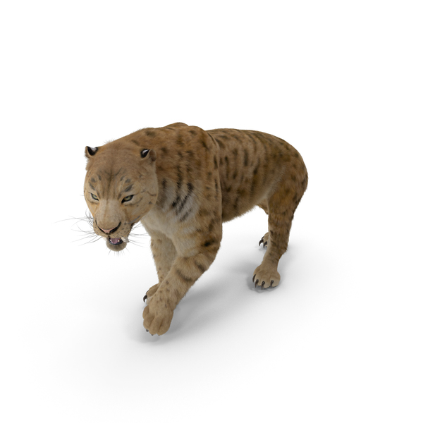 Saber Tooth Tiger Walking Pose with Fur PNG & PSD Images
