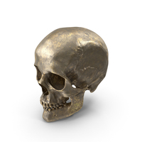 Human Skull Old Gold PNG & PSD Images