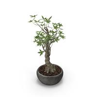 Plant PNG & PSD Images