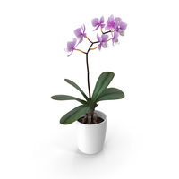 Orchid Flower PNG & PSD Images
