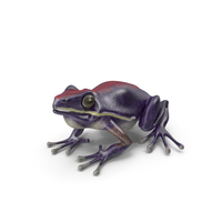 Frog PNG & PSD Images