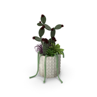 Cactuses With Pot PNG & PSD Images