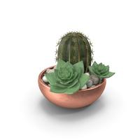 Cactus With Pot PNG & PSD Images